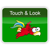 touch and look